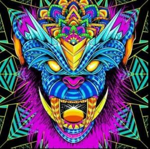 psy trance festival